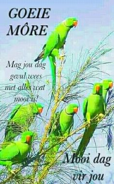 Goeie More, Good Morning Messages, Good Night Quotes, Morning Greeting, Afrikaans, Prayers, Life Quotes, Bird, Animals