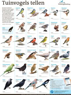 Animals Of The World, Animals And Pets, Cute Animals, Bird Identification, Kinds Of Birds, Bird Food, Autumn Garden, Wild Birds, Beautiful Birds
