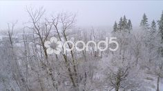 #AerialShot #Ascend #Trees #Woodland #Winter #Snow #Drone Footage - #StockFootage   by RyanJonesFilms