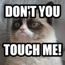 grumpy cat dont touch me - Google Search