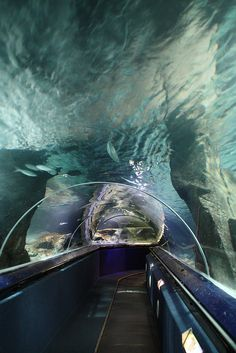Auckland, Kelly Tarlton Aquarium Tunnel by Bert#, via Flickr