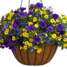 Laguna® Dark Blue - Lobelia erinus Lucia® lobelias are bred to handle the summer heat better than mo Container Herb Garden, Container Gardening Vegetables, Container Flowers, Flower Planters, Flower Pots, Succulent Containers, Fall Planters, Container Plants, Vegetable Gardening