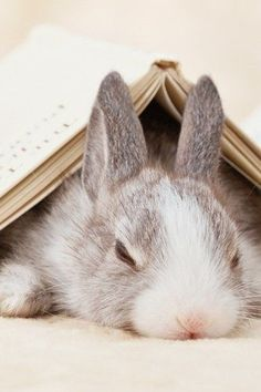 This is how pet rabbits read... they very rarely do it like this in the wild though. ;-)