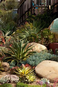 A well-designed rock garden of agaves, aloes, blue chalk sticks senecio and other succulents. Succulent Landscaping, Front Yard Landscaping, Planting Succulents, Succulent Rock Garden, Cacti Garden, Succulent Planters, Succulent Arrangements, Hanging Planters, Front Garden Landscape