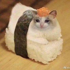 Sad Cat Meme, Cute Cat Memes, Cute Animal Memes, Animal Jokes, Cute Funny Animals, Funny Animal Pictures, Cute Cats, Funny Cat Faces, Animal Fun