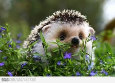 Baby hedgie in the grass!!!