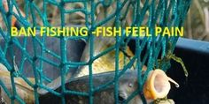 Petition: NOAA Fisheries,ICCAT, European Commission: BAN FISHING