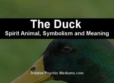 What does the duck spirit animal really mean? Find out the true meaning and symbolism of the duck in this special spirit animal analysis. Animal Meanings, Animal Symbolism, Animal Spirit Guides, My Spirit Animal, Spirit Meaning, Aura Colors, Spiritual Symbols, Power Animal