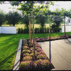 Moderner Garten mit Mauern als Sichtschutz und Platanen