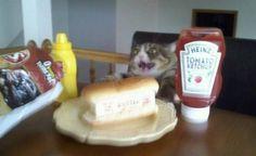 1223. Nu jäklar ska det ätas lunch!