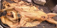 Stop Dissection of Cats by 15 year old Palm Beach County Students