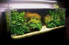 #aquascape #nature #aquarium #plants #aqua #crystal #water #tank #fishtank #plantedtank #scape #design #shrimp #aquavrn #vrn