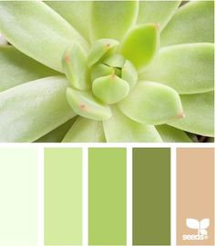 pastel greens
