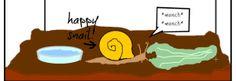 Keeping snails as pets in a terrarium