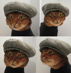 Cat in a herringbone hat.