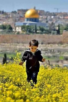 ~# Israel, Palestine History, Mecca Wallpaper, Islam Marriage, Dome Of The Rock, Bless The Child, Palestinian Embroidery, Apartheid, Precious Children