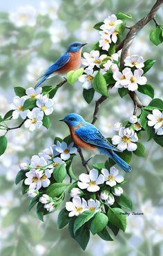 Beautiful Bird Pictures Nature New Ideas Pretty Birds, Beautiful Birds, Animals Beautiful, Beautiful Pictures, Exotic Birds, Colorful Birds, Bird Pictures, Birds Pics, Owl Pics