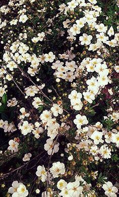 Flowers 3 ♥