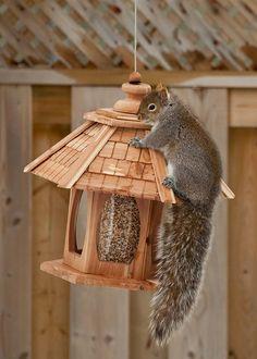 Chasing squirrels away from birdfeeders: Burns 5,000 calories (Just kidding!)