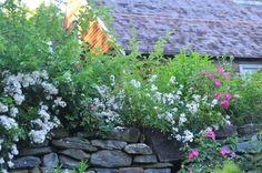 Tasha's Garden.  Rookery Ramblings