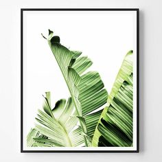 Banana leaf Print, Leaf Photography, Tropical plant photo, Tropical Wall Art, Minimalist Print, Green, Scandinavian Printable Art, Modern