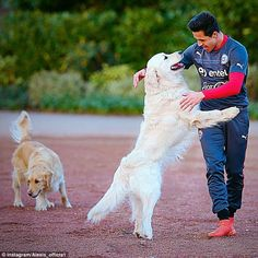 Alexis Sanchez is pictured with his two dogs Atom and Humber during training with Chile on...