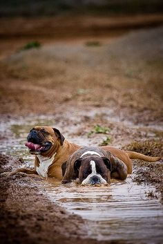 I told you mud baths were awesome!! LOL!