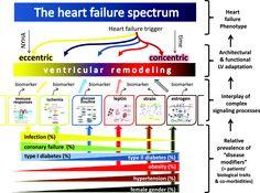 the heart failure spectrum Nursing School Motivation, Nursing School Tips, Nursing Tips, Nursing Notes, Med Surg Nursing, Cardiac Nursing, Nursing Mnemonics, Heart Facts, Hospice Nurse