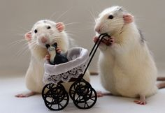 Cute mice, Thats right you get back at those kitties...Grrr!