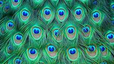 plumas - Buscar con Google