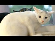 Warning: You may get a HEADACHE FROM LAUGHING TOO HARD! - Super FUNNY ANIMAL videosThis funny animal compilation is the hardest try not to laugh challenge ever! You will laugh so hard that you will fall out of your chair laughing! Ju... #animal #animals #animalsfunny #animalsquotesfunny #cat #catsanddogs #cutefunnyanimals #dogcat #DOGS #dogsfunny #funny #funnyanimals #funnyanimalsmemes...