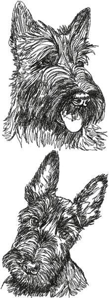 Scottish Terrier (Aberdeen Terrier) Set Set of 2 Machine Embroidery Designs White Ennis White Ennis Eyster Schnauzer, Advanced Embroidery, Machine Embroidery Patterns, Embroidery Ideas, Floral Embroidery, Embroidery Techniques, Dog Art, Cross Stitch, Drawings