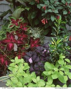 Container Plantings in the Shade Yield a Spectacular Garden | Fine Gardening