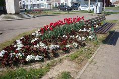 Gredica proljetnog cvijeća na trgu u Retfali