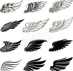 Set of twelve vector wings. The collection includes a simple form of the wings and the detailed