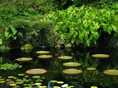 https://flic.kr/p/o4XbB5 | Lush Pond at the Fairchild Garden | Fairchild Tropical Botanic Garden, Miami, FL by Ethan Oringel courtesy of Flickr Creative Commons licensed by CC BY 2.0 https://creativecommons.org/licenses/by/2.0/