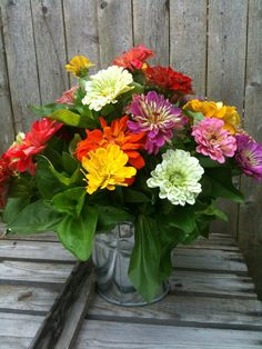 Zinnias are usually produced as cut flowers from June to November. They are native to scrub and dry grassland areas and grow in the southwestern United States to South America.