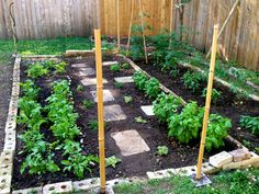 Need to put stepping stones in my vegetable bed