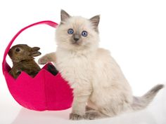 Easter cat and Easter bunny  ❤ Upload you cat pictures at www.showmecats.com ❤ #showmecats #thesocial   #Kittens