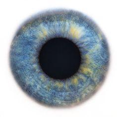 human eye, macro, by Rankin (Eyescapes series) Iris Drawing, Iris Eye, Postmodern Art, Realistic Eye Drawing, Eyes Artwork, Sketching Tips, Look Into My Eyes, Eye Painting, Human Eye