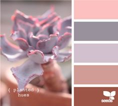 pink gray brown purple