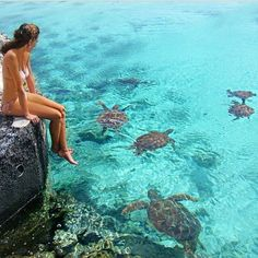 I want to go somewhere where there is an abundance of sea turtles