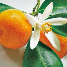 Juicy Clementine, a tropical island scent of sweet clementine mingled with coconut. www.partylite.biz/cndlluvrs