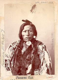 Frisking Elk, Sioux.