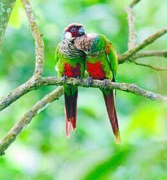 http://tudorocha.blogspot.com.br/2016/08/as-aves-ameacadas-de-baturite.html?m=1