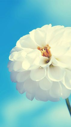 30  HD Wallpapers For iphone 5