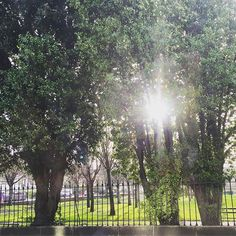 Sunshine through the trees on my way to the office  Happy February!!