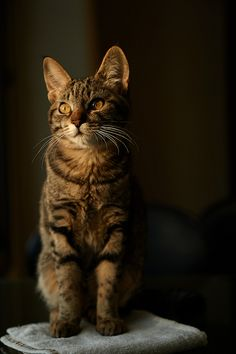 Lovely tabby cat whiskars and markings