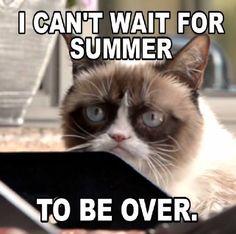 Image result for grumpy cat hates summer meme