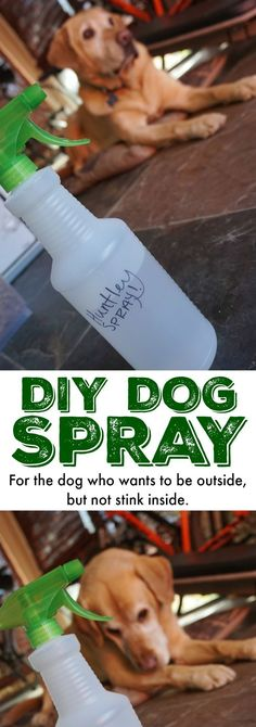 If your dog LOVES to be outside, you need this DIY Spray for Stinky Dogs! It's a LIFESAVER when you want your home smelling fresh and not like outside! #diyrecipesfordogs #dogrecipes